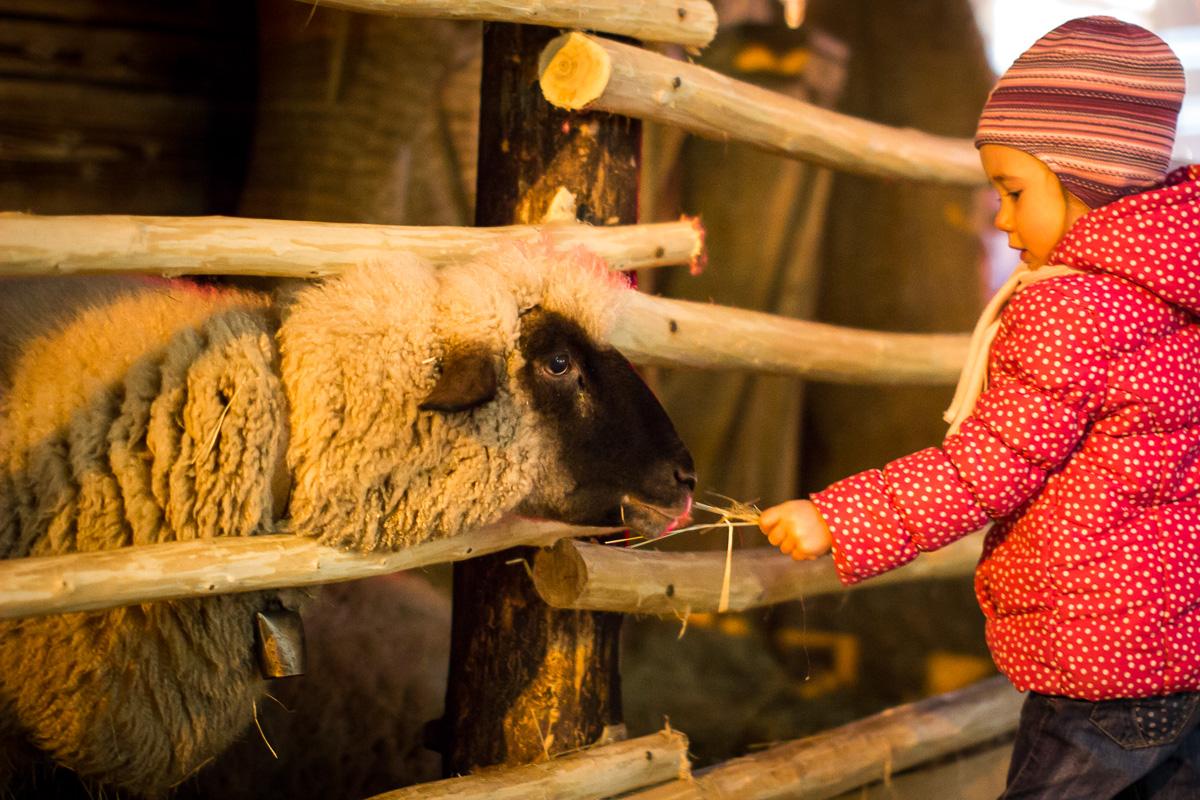 Dieta a ovecka - Vianocne trhy