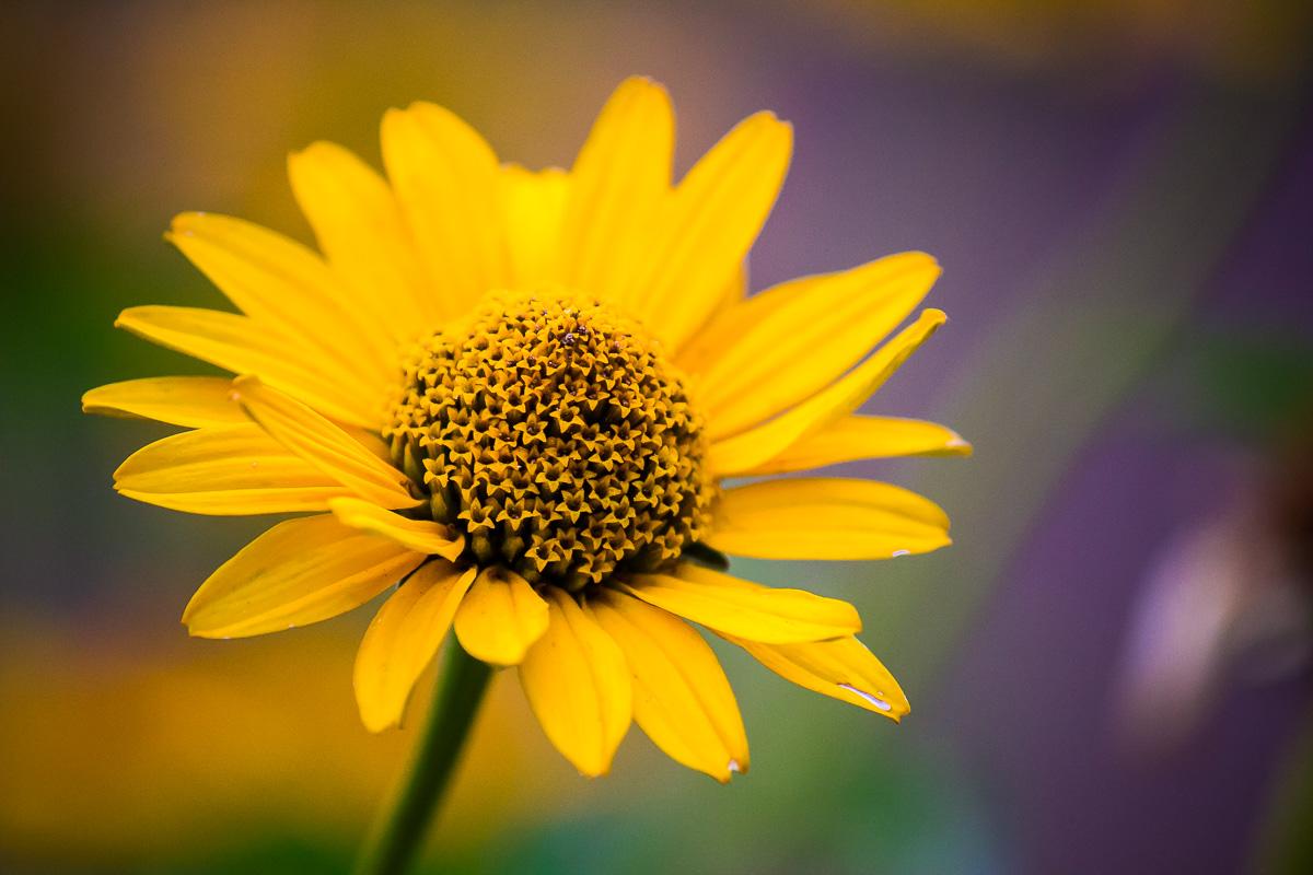 Vah - Floral, Details